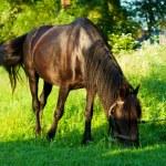 Horse on pasture — Stock Photo #18638875