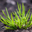 Stock Photo: Green sprout in ground