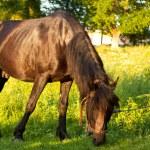 Horse on pasture — Stock Photo #22695065