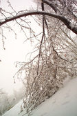 Snow covered tree — Stock Photo