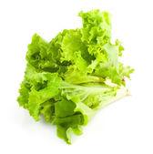 Green leaves of lettuce salad — Stock Photo