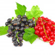 Red and black currant — Stock Photo #12580074