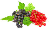 Red and black currant — Stock Photo