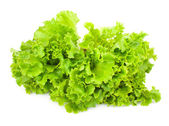 Green leaves of lettuce salad — Stock Photo