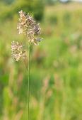 Zielona trawa tło tekstura prosto — Zdjęcie stockowe