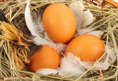Eggs in basket — Stock Photo