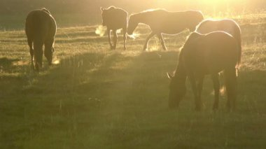 Morning Pasture — Stock Video