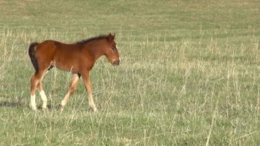 Foal — Stock video