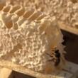 abeja y miel — Vídeo de Stock