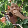 The child tears the branches of apricots — Stock Video