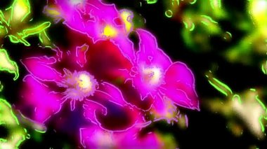 Three large purple flower. — Stock Video