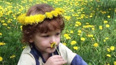 Child in Dandelions — Stock Video