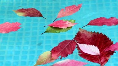 Autumn leaves floating in blue water pool — Stock Video