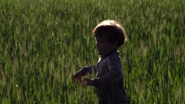 Boy running through   wheat field — Vidéo