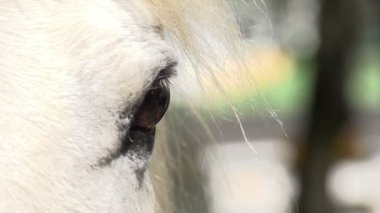 Sad Sight Horse — Stock Video