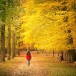 In autumn park — Stock Photo #12651461