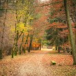 Pathway in autumn park — Stock Photo