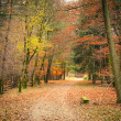 Stock Photo: Pathway in autumn park