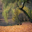 图库照片: Pond in the autumn park