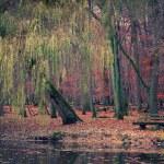 estanque en el parque otoño — Foto de Stock