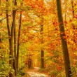 Pathway in autumn forest — Stock Photo #12651719