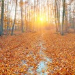 Sunrise in the autumn forest — Stock Photo