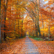 Pathway in the autumn forest — Stock Photo #12651805