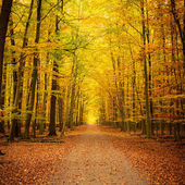 Herfst park — Stockfoto