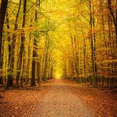 Jesień w parku — Zdjęcie stockowe