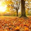 Sunny autumn foliage — Stock Photo #12808324