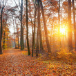 Sunset in the autumn forest — Stock Photo #12808333