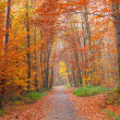 Pathway in the autumn park — Stock Photo