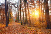 Sunset in the autumn forest — Stockfoto