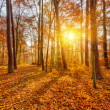 Sunset in the autumn forest — Stock Photo #13266383