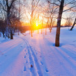 Sunset in winter forest - Stock Photo