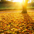 Stock Photo: Sunny autumn foliage