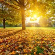 Sunny autumn foliage — Stock Photo