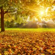 Sunny autumn foliage — Stock Photo #29807393