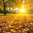 Sunny autumn foliage — Stock Photo #29807429