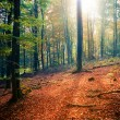 Stock Photo: Sunny autumn forest