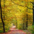 Autumn forest — Stock Photo #29807591