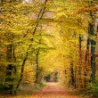 Autumn forest — Stock Photo #29807751