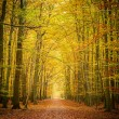 Autumn forest — Stock Photo #29807831