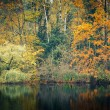Foresta d'autunno — Foto Stock