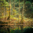 Autumn forest — Stock fotografie #29807861