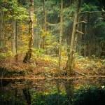höstskog — Stockfoto