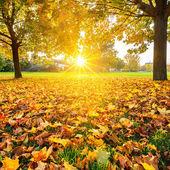 Sunny autumn foliage — Stock Photo