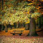 Bench in autumn forest — Stok fotoğraf