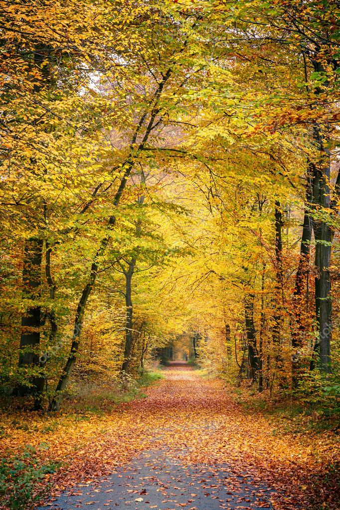 通路在秋天的森林中