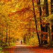 Autumn forest — Stock Photo #29932501